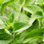Stevia v/s Artificial Sweetener