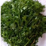 Coriander - A medicinal plant in your own yard