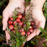 Cranberry: The small bowl of great wonders