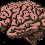 How to avoid head injury?