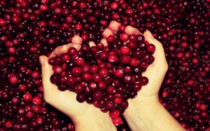 Cranberries and its health benefits
