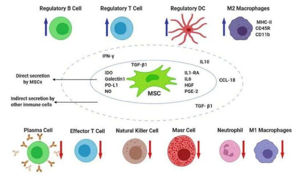 immune-cells-and-cytokines